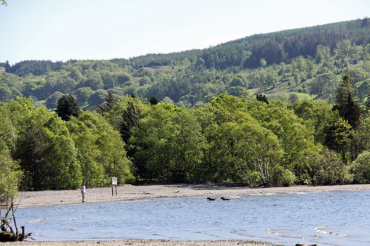 Dog friendly holidays at Lake Coniston