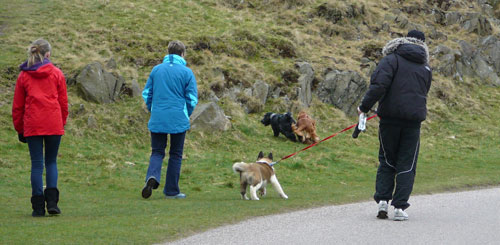Petfriendly holiday cottages in the Peak District